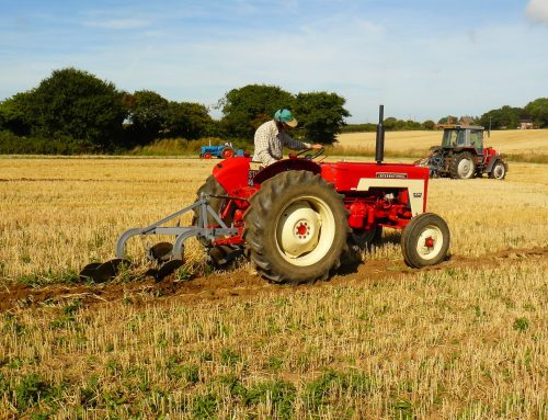 Ploughing Bangers and Chips